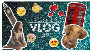 VLOG # 9 \ Журнал \ Моя собака \ Практика \ Redington K