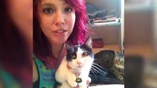 Cat Meowing Shush || HiCatEvil