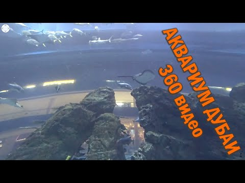 Дубаи360/Путевые Заметки – Dubai Aquarium & Underwater Zoo в режиме 360, часть 1 – Аквариум Дубаи