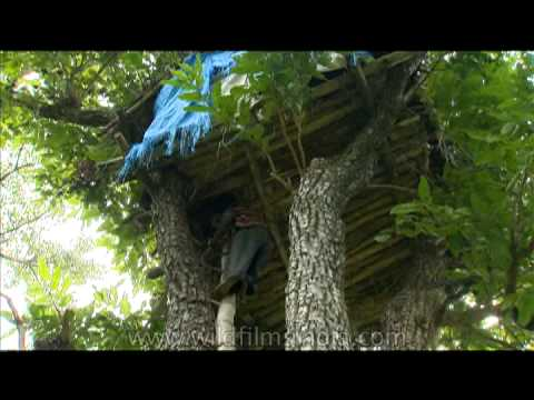 Life up in a tree house of an Indian tribe
