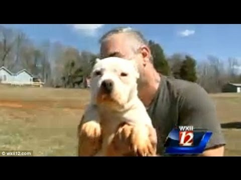 Man Tattoos His Dogs! Cruel or Cool?