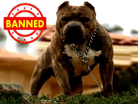 Should Certain Dog Breeds Be Banned?