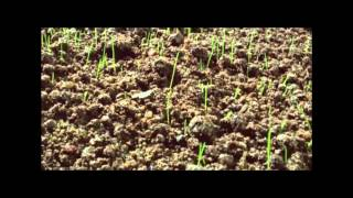 ทอชทีวี - สวนลำไยไร่ละล้าน ตอนที่ 2 (จบ)