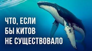 Что, если бы на Земле не было китов