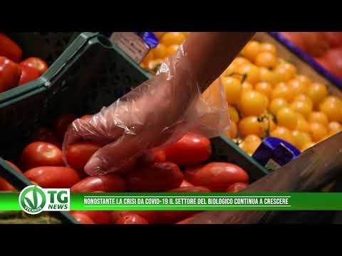 ECOTRAP -- Trapola biologica contro la mosca dell' olivo from YouTube · Duration:  8 minutes 59 seconds