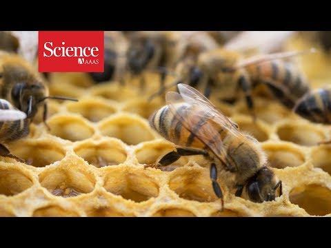 Pesticides found in honey around the world