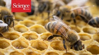 Pesticides found in honey around the world