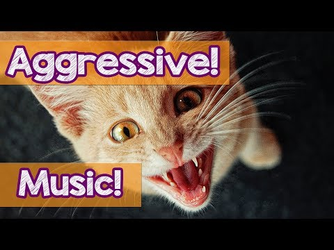 Music for Aggressive Cats! Stop Your Cat From Biting and Scratching! How to stop Cats From Fighting!