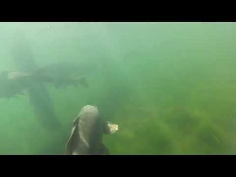 Seneca State Park Marina Underwater