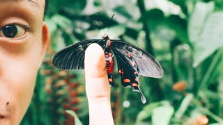 Jumalon Butterfly Sanctuary: A 50 pesos Experience