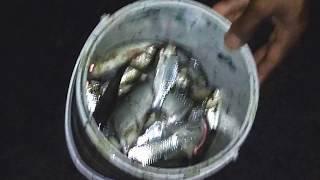 Download lagu Nyeser ikan Saat Banjir Sungai Kali Banjaran Purwokerto Banyumas MP3