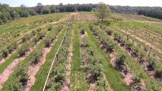 Valley Farm Aerial Blueberries