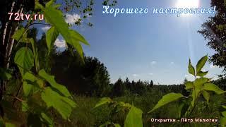 """Лес живая природа - Красивое пение птиц """"Хорошего настроения""""!"""