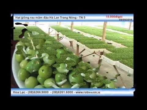 Hạt giống rau mầm đậu Hà Lan Trang Nông - TN 5 Tam Nông