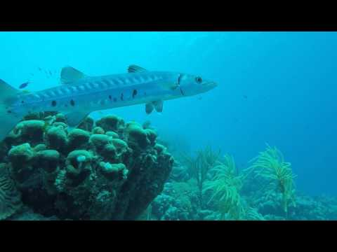 BARRACUDA   BONAIRE APRIL 2016