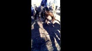 Cabalgata en Rodeo Durango 2015