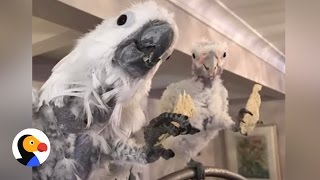 Parrot Refuses to Leave Friend With Cancer | The Dodo