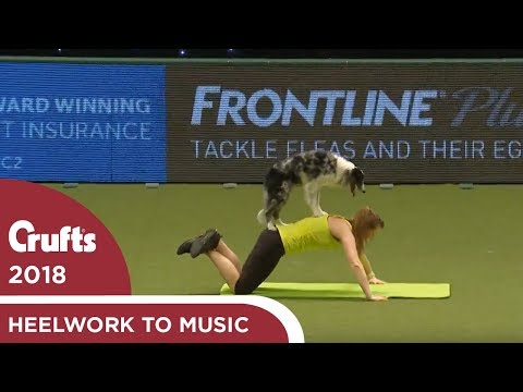 Dog gets a workout during Heelwork to Music | Crufts 2018