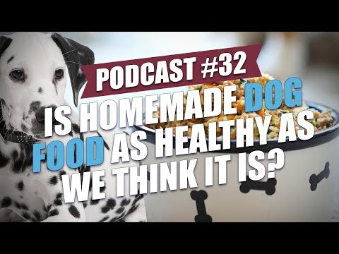 TOP #32: Is Homemade Dog Food As Healthy As We Think It Is?