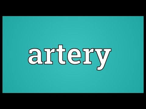 Artery Meaning