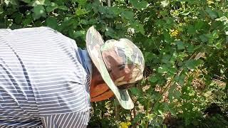 복분자나무키우기