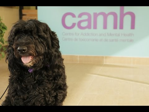 Dog Therapy at CAMH
