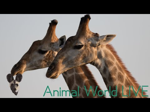 Animal World LIVE With Brent Leo Smith