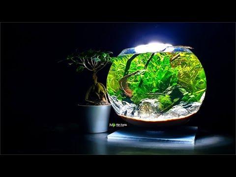 HOW TO: 3 GALLON FISH BOWL AQUASCAPE - George Farmer Style (No Filter, No Ferts, No co2, No heater)