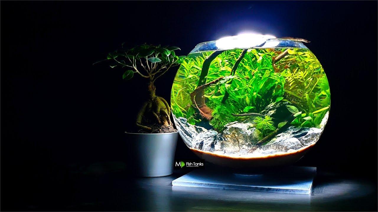 Aquascape Ideas Aquascape Fish Bowl