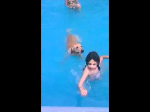 Jake Engelman, our Golden Retriever Swimming first...