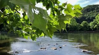2019 Shenandoah River Canoe Trip   Shenandoah River State Park   Bentonville, Virginia
