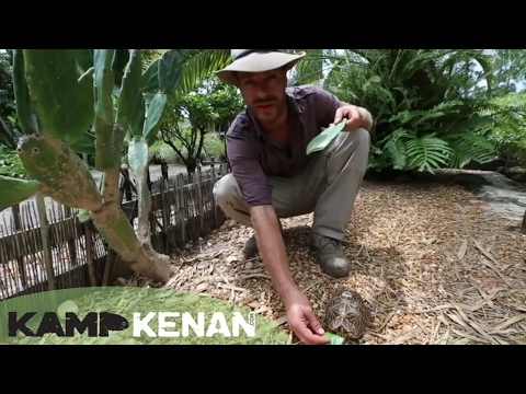 Tortoise Care And Nutrition : Kamp Kenan S1 Episode 9