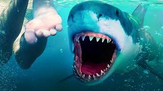 Существа, из-за которых исчезли мегалодоны, все еще населяют океаны!