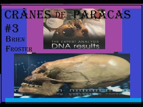 CRANES ALLONGES de PARACAS ANALYSES ADN B FOSTER #7 Conclusions