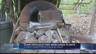 State arrests 11, confiscates marijuana plants, crossbow from elaborate, illegal camps in Kalalau