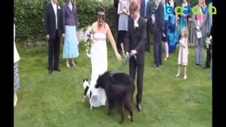 Чисто поржать на свадьбе!