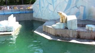 Достопримечательности новосибирска, Новосибирский зоопарк, медведица с медвежонком(Медведица и медвежонок в Новосибирском зоопарке. Медвежонок плавает и купается, а медведица позирует и..., 2014-06-20T16:09:08.000Z)