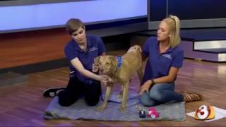 Pets on Parade -5/28/16 - adoptable pet (Part 2)
