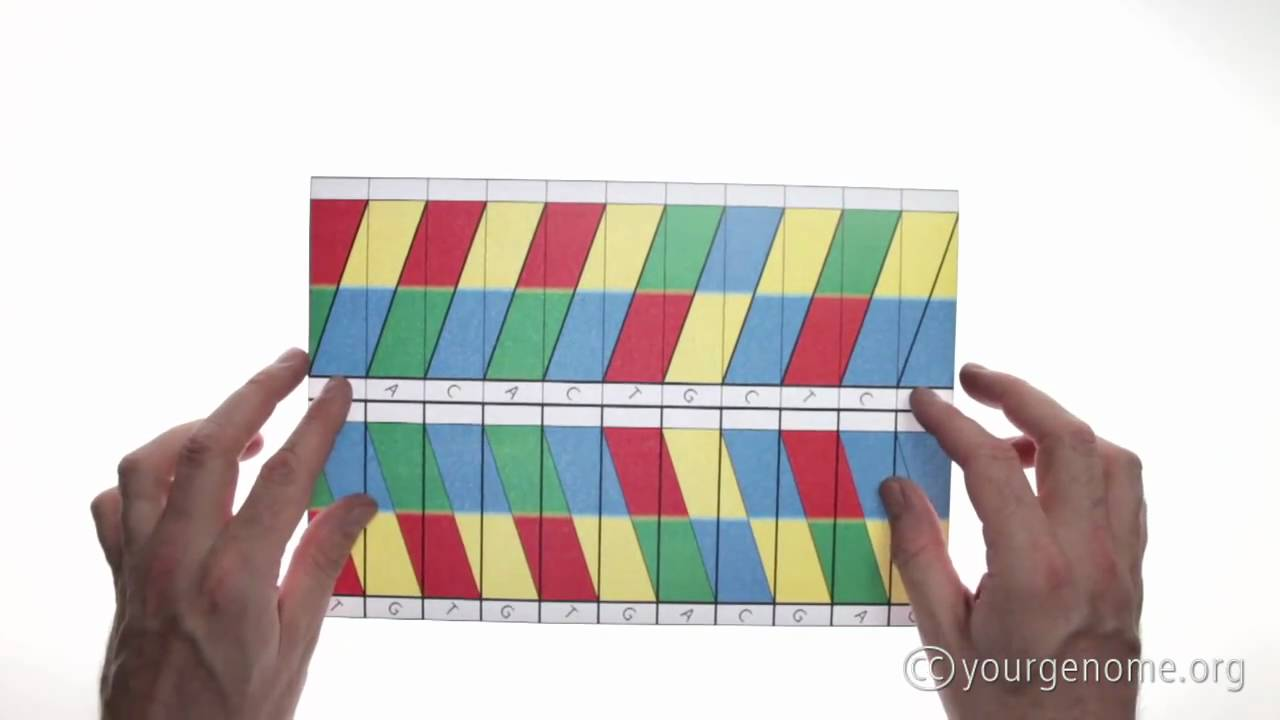 DNA origami: how to fold a double helix - YouTube