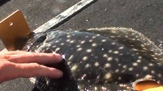 HOW TO CATCH FLOUNDER EAZY WITH GULP