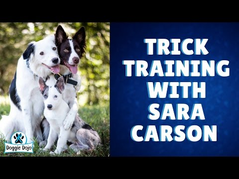 The Super Collies Dog Tricks with Sara Carson