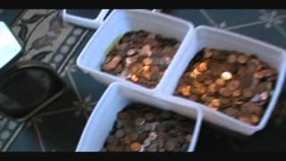 U.S. Copper Cents Automatic Penny Sorting Copper / Zinc