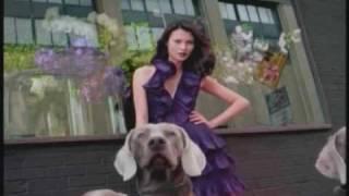 Weimaraner Maybelline Commercial