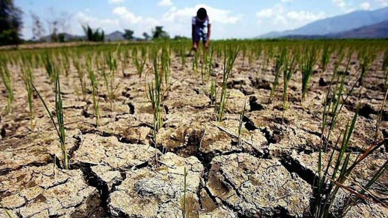 Засуха в Молдове. Мощный урон урожаю - YouTube