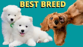 How To Choose The Best Dog Breed For You
