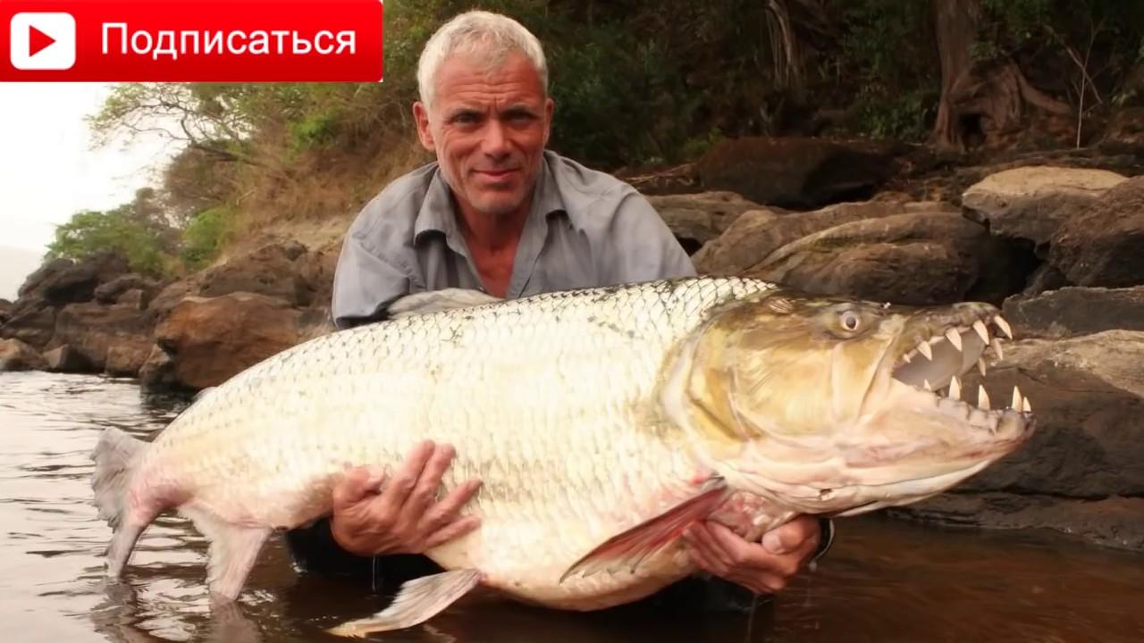Самые ужасные, уродливые рыбы.Samyie uzhasnyie urodlivyie yadovityie neobyichnyie i sobennyie ryibyi