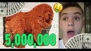 כלב שעולה 5 מיליון שקלים? (הדברים הכי יקרים בעולם)