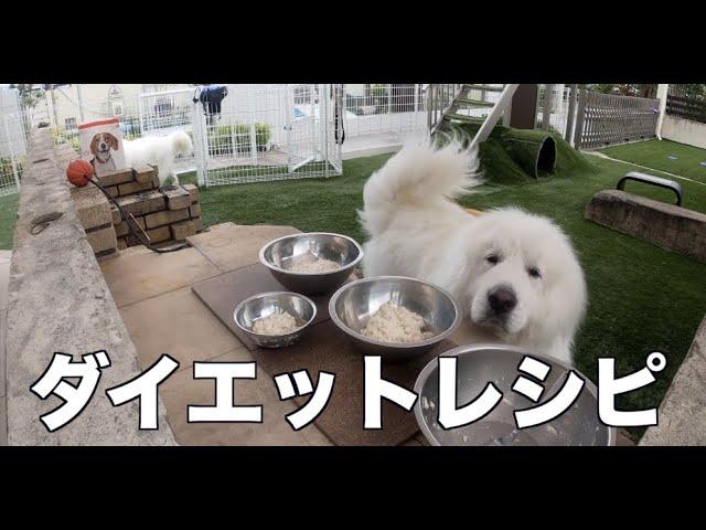 愛犬のダイエット食を手作りします