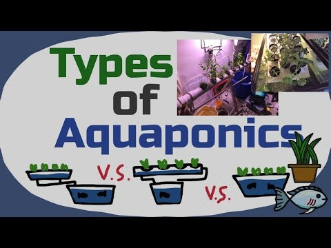 Types of Aquaponic Systems