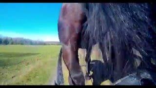 Stadnina koni w Eminowie - trening do zaprzęgu - DJI Phantom 4K